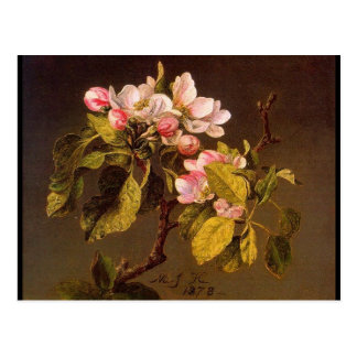 Martin Johnson Heade Apple Blossoms Postcard