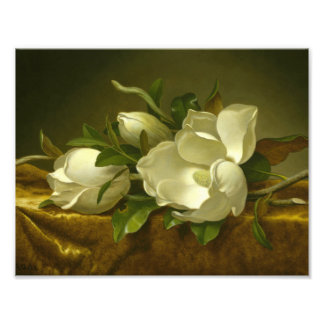 Martin Johnson Heade - Magnolias on Gold Velvet Art Photo