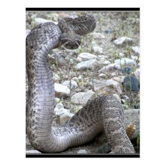 Martinez Wash Rattlesnake in Congress, AZ Postcard