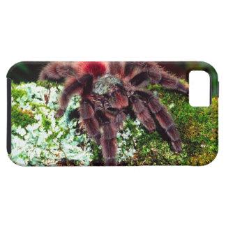 Martinique Tree Spider, Avicularia versicolor, Tough iPhone 5 Case