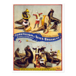 Marvellously Trained Circus Seals, 1899