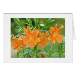 Marvelous Mimulus Notecard