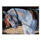 Marwari Horse Rajasthan 2010 Postcard