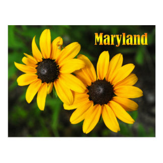 Maryland State Flower: Black-eyed Susan Postcard
