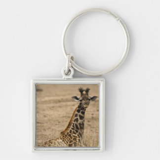 Masai Giraffe, Giraffa camelopardalis, resting Key Chains