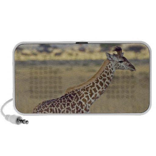 Masai Giraffe (Giraffa camelopardalis Speakers