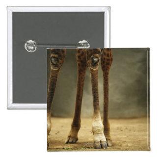 Masai giraffe, low angle view of legs, Giraffa 15 Cm Square Badge