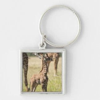 Masai giraffes, Giraffa camelopardalis 2 Key Chains