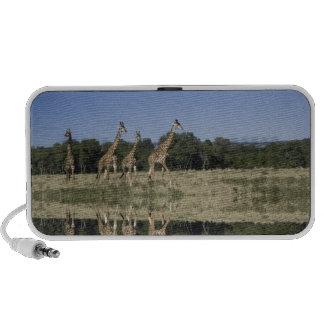 Masai Giraffes, Giraffa camelopardalis, Masai iPhone Speakers