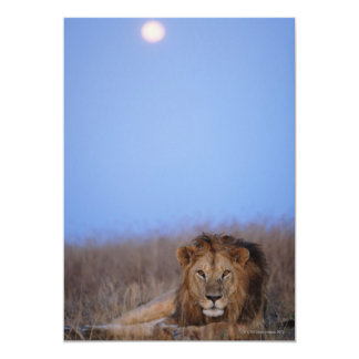 Masai Mara National Reserve 13 Cm X 18 Cm Invitation Card