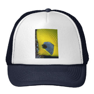 Masked butterfly fish trucker hat