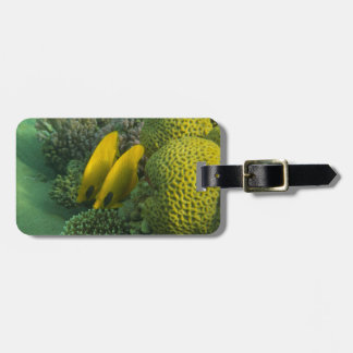 Masked Butterfly Fish luggage tag