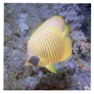Masked Butterfly Fish Tile