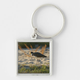 Masked Plover Key Ring