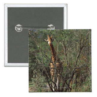 Massai Giraffe 15 Cm Square Badge