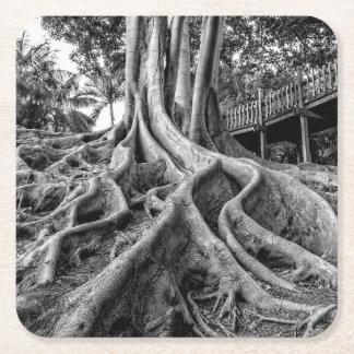 Massive rubber tree roots square paper coaster