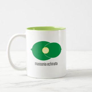 Massonia Echinata Mug