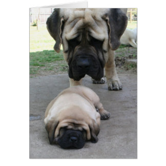 Mastiff father and puppy Fathers Day Card