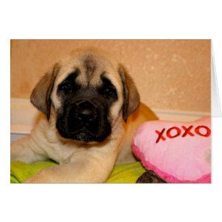 Mastiff puppy valentine card