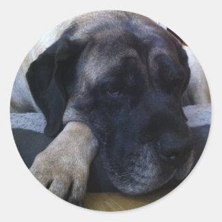Mastiff Round Sticker