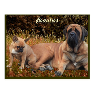 Mastiff with French Bulldogge postcard