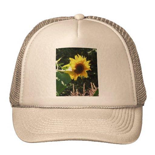 maternal sunflower hats