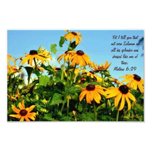 Mathew 6:29 photo art