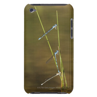 Mating Damselflies iPod Touch Covers