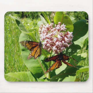 Mating Monarch Butterfly on Milkweed Photo Mousepads