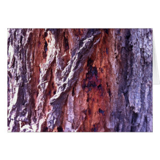 Mature Redwood gum tree bark in summer Card
