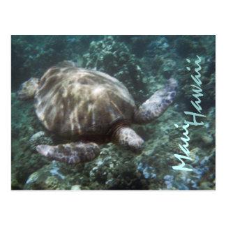 Maui Hawaii sea turtle postcard