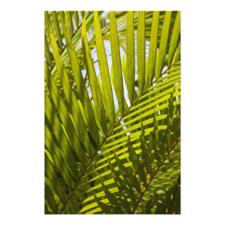 Mauritius, Central Mauritius, Moka, palm 2 Photo Print