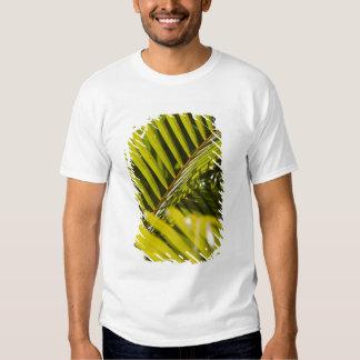Mauritius, Central Mauritius, Moka, palm Tees