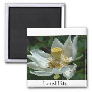 Mauritius, Lotosblüte Square Magnet