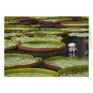 Mauritius, Pamplemousses, SSR Botanical Card