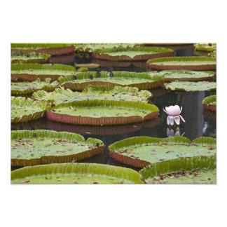 Mauritius, Pamplemousses, SSR Botanical Art Photo