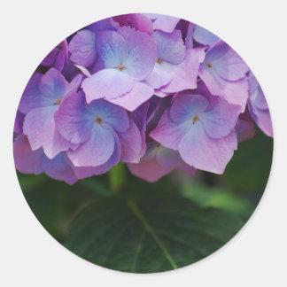 Mauve Hydrangea Blooms on a Sticker