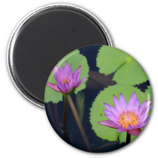 Mauve pink water lilies magnet