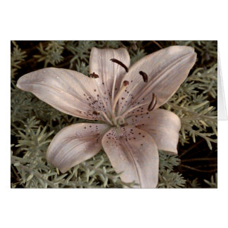 Mauve Satin Lily Blank Greeting Note Card