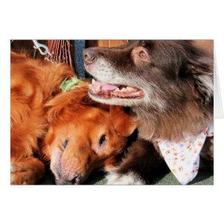 Max - Gold Retver Charlie Brwn - Aust Shep Photo-2 Greeting Card