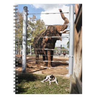 Max The Barn Dog & Asian Elephant Note Books