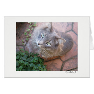 Max the Cat   #-3 Card