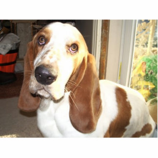 Max the pathetic basset hound standing photo sculpture