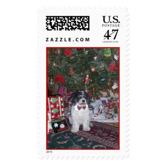maxie postage