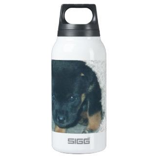 maxie puppy 0.3L insulated SIGG thermos water bottle