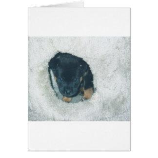 maxie puppy greeting card