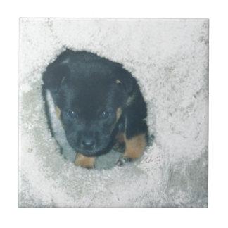 maxie puppy small square tile