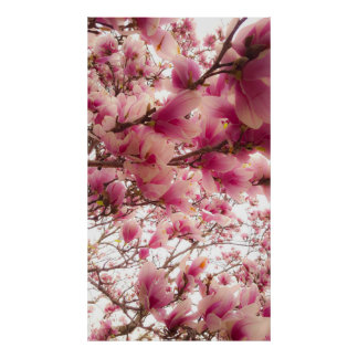 May Flowers Poster