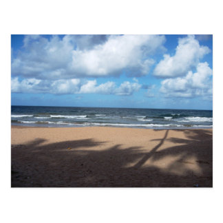 Mayaro Beach Shadows of Coconut Trees Postcard