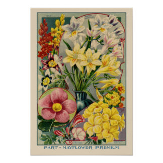 Mayflower Vintage Seed Cover Poster